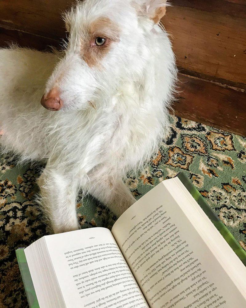 """Leah's adorable dog """"reading"""" an open book"""