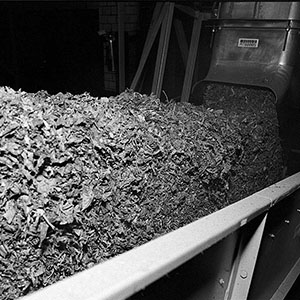 Tobacco leaves being processed in a factory